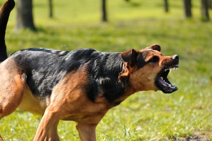 Dog Bite Attorneys in Dallas, Plano, Frisco, Fort Worth