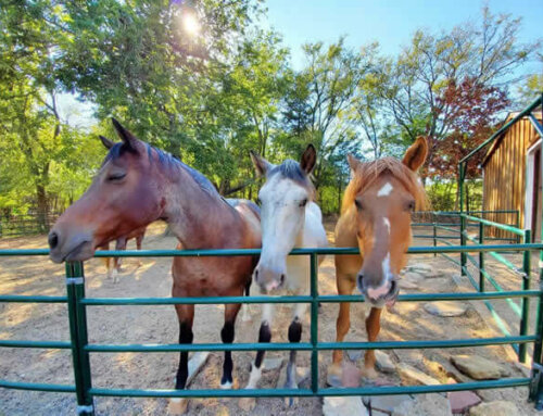 Meet Our Rescue Horse Mascots